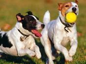 Cómo enseñar perro traer pelota