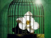 Reseña: Garden, Emma Romero