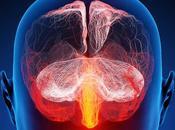 ¡Impactantes Secretos Revelados Sobre Cerebro!