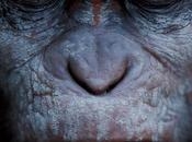 """Pase VIP: amanecer planeta simios"""""""