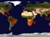 ¿Qué entendemos incendio forestal?
