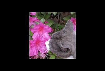 Plantas de interior seguras para los gatos paperblog Plantas seguras para gatos