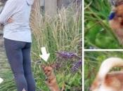 abandono animales verano: Acoge adopta!
