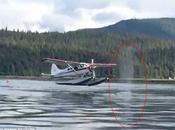 Increíble vídeo muestra aterrizaje hidroavión centímetros ballena