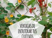 Ventajas cultivar vertical tutores