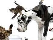 Cincodays Bonus importancia cuidar mascota