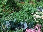 Aprender cultivar huerto ecológico