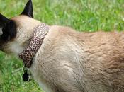 experto gato para hackear Wi-Fi vecinos