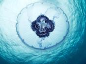 PLANETA MEDUSAS. medusas extraterrestres Alexander Semenov