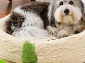 Cama para gatos perros reciclando ropa