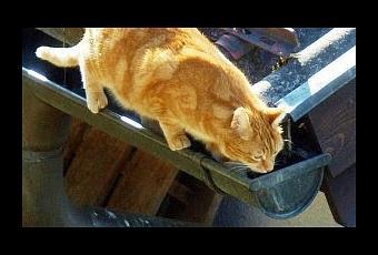 C mo evitar las denuncias vecinales por molestias del gato for Como evitar los gatos en el jardin