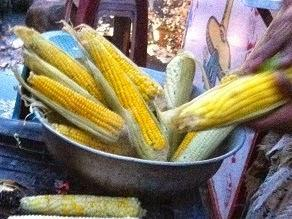 Ley Monsanto - La Conspiración Alimenticia llega a Guatemala.
