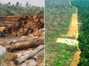Amazonia Brasil pierde 3.036 kilómetros cuadrados selva durante