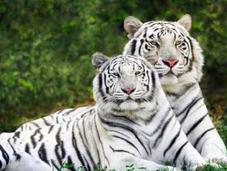 Especies animales vegetales amenazados
