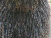 Distinguido Perro Turco Andaluz Agua Español