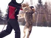 Adiestramiento Obediencia. ¿Son mismo?