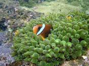 épico viaje 'Nemo' para encontrar nuevo hogar