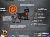 Beneficios tener perro #Infografía #Mascotas #Salud