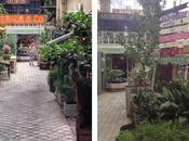 Federica jardín para soñar centro Madrid