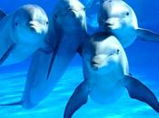 S.O.S. mamíferos marinos