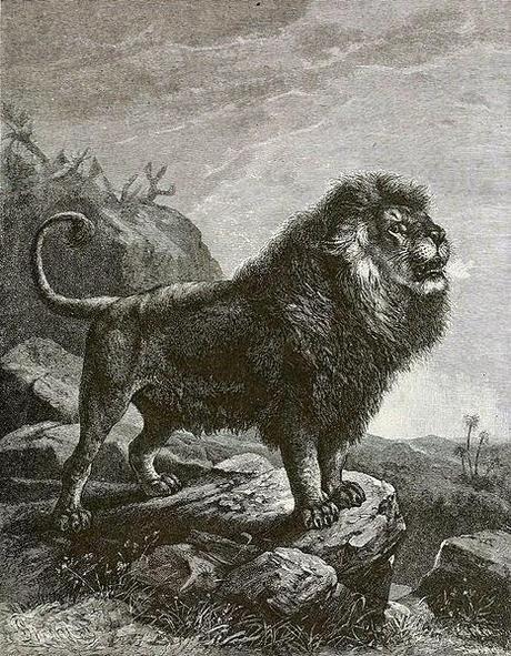 El león del Atlas