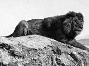 león Atlas