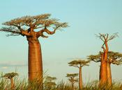 ¿conoces aceite baobab para nutrir piel?