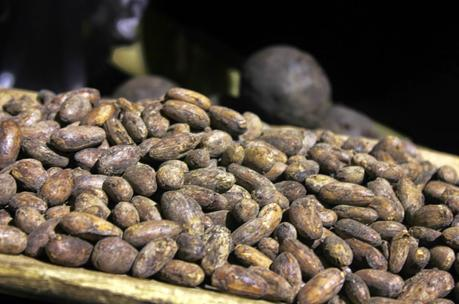 2do Festival del Cacao