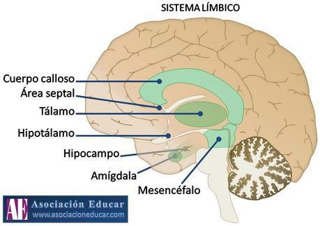 limbico (1)