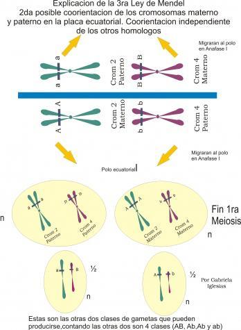 2da-coorientacion-centromerica