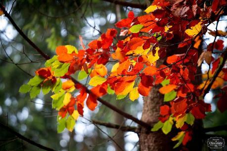 Foto del otoño hojas