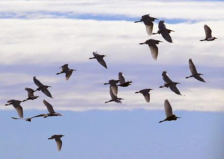 Los observadores de aves ya somos bandada