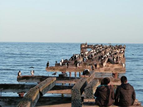 Atardecer entre cormoranes en Punta Arenas