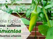 Cómo cultivar pimientos huertos urbanos
