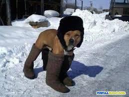 perros graciosos (3)