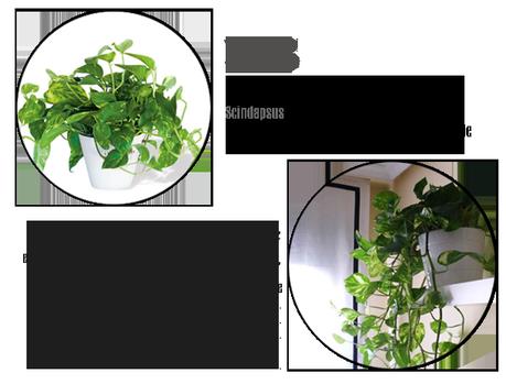 3 plantas resistentes en casa todo el a o paperblog - Plantas de exterior resistentes todo el ano ...