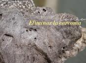 Cómo eliminar carcoma