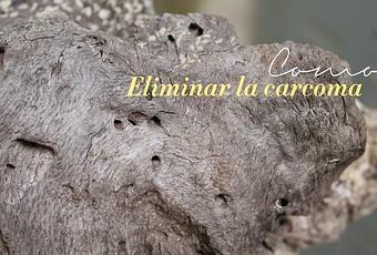 C mo eliminar la carcoma paperblog - Como combatir la carcoma ...