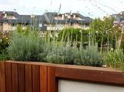 Diseño jardín decoración para terraza pequeña mucho encanto