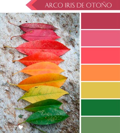 6 paletas de color para oto o porque el oto o tambi n tiene un arco iris de colores hermosos - Paleta cromatica de colores ...