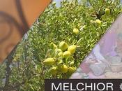 Aceite Argán Ecológico MELCHIOR BALTHAZAR secreto belleza marroquí