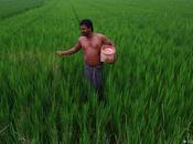 India: Revolución verde, desequilibrio entre hombre mujer desarrollo social comunitario