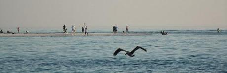 Pelícano sobre el mar en el Golfo de México