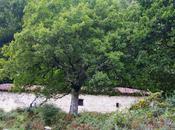 Uli, caminos brujas, excursión Areso Gaztelu