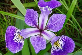 Bulbos de oto o el iris paperblog - Bulbos de otono ...