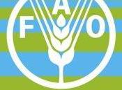Cmg: mundial alimentación.