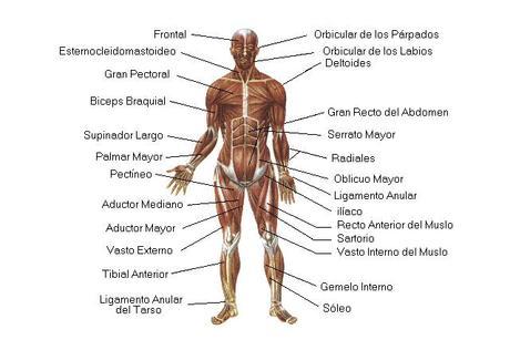 El cuerpo y la imagen