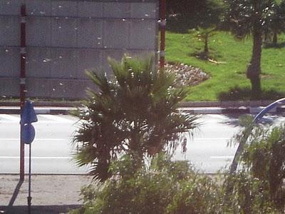 Invasión de libélulas en Alicante. 17/10/2010