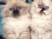 mejor comprar gata gato