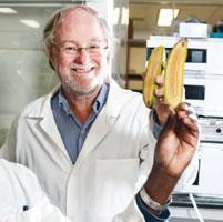 Bananas transgénicas y SciFest en Cuenca…